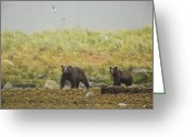Grizzly Bears Greeting Cards - Bears in the Rain Greeting Card by Tim Grams