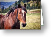 Green Pasture Greeting Cards - Beautiful Bay Horse In Pasture Greeting Card by Tracie Kaska