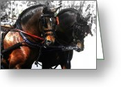 Carriage Team Greeting Cards - Beautiful Bay Greeting Card by JAMART Photography