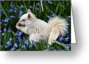 Morph Photo Greeting Cards - Beautiful blue eyes Greeting Card by Doris Potter