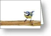 Cut Out Greeting Cards - Beautiful Blue Tit Greeting Card by MarcelTB