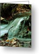 Mario Brenes Simon Greeting Cards - Beautiful Creek Greeting Card by Mario Brenes Simon