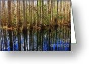 Florida Swamp Greeting Cards - Beautiful Day in the Cypress Swamp Greeting Card by Carol Groenen