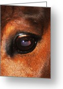 Quarter Horse Greeting Cards - Beautiful Esme Greeting Card by DiDi Higginbotham