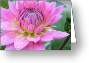 Flower Gardens Greeting Cards - Beautiful Flower in Daybreak Greeting Card by Christine Belt
