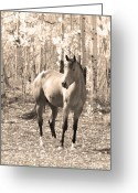 Equine Posters Greeting Cards - Beautiful Horse In Sepia Greeting Card by James Bo Insogna