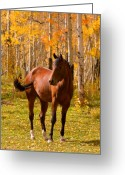 Landscape Posters Greeting Cards - Beautiful Horse in the Autumn Aspen Colors Greeting Card by James Bo Insogna