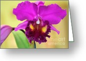 Florida Flowers Greeting Cards - Beautiful Hot Pink Orchid Greeting Card by Sabrina L Ryan