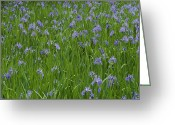 Kansai Triangle Greeting Cards - Beautiful Picture Of Irises In Bloom Greeting Card by George F. Mobley