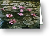 Lotus Leaves Greeting Cards - Beautiful Pink Lotus Water Lilies Bloom Greeting Card by W. Robert Moore