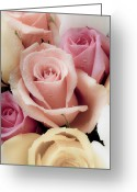 Pastels. Greeting Cards - Beautiful Roses Greeting Card by Garry Gay