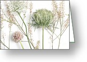 Tiny Flowers Greeting Cards - Beautiful Weeds Greeting Card by HD Connelly