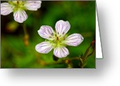 Mario Brenes Simon Greeting Cards - Beautiful wild flower Greeting Card by Mario Brenes Simon