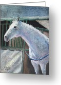 White White Horse Pastels Greeting Cards - Beauty Greeting Card by Arline Wagner