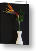 Bird Of Paradise Greeting Cards - Beauty from Hawaii Greeting Card by Marsha Heiken