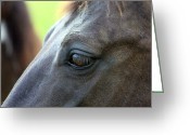 Quarter Horse Photo Greeting Cards - Beauty is in the Eye Greeting Card by Karon Melillo DeVega