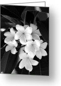Black And White Floral Greeting Cards - Beauty Is Simple Greeting Card by Vilma Rohena