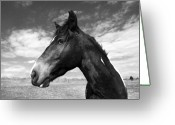 Wild Horse Greeting Cards - Beauty Greeting Card by Jimmy Bruch