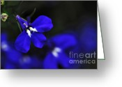Blue Petals Greeting Cards - Beauty of Blue Greeting Card by Kaye Menner