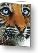 Tiger Cub Greeting Cards - Beauty of my Mothers Eyes Greeting Card by Jurek Zamoyski