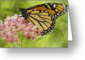 Pollinate Greeting Cards - Beauty Of Nature Greeting Card by Jack Zulli