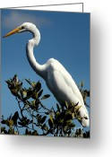 Cranes In Florida Greeting Cards - Beauty of Sanibel Greeting Card by Karen Wiles