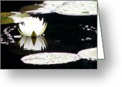 Vision Of Loveliness Greeting Cards - Beauty Of The Dark Greeting Card by Debra     Vatalaro