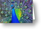 Jeff Kolker Greeting Cards - Beauty Whatever the Name Greeting Card by Jeff Kolker