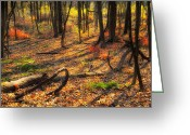 Forest Floor Photo Greeting Cards - Beauty Within Greeting Card by Bill  Wakeley