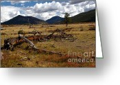 Rocky Mountain National Park Greeting Cards Greeting Cards - Beaver Meadows Greeting Card by Jon Burch Photography