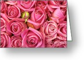 Closeup Greeting Cards - Bed Of Roses Greeting Card by Carlos Caetano