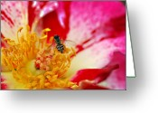 Designers Choice Photo Greeting Cards - Bee and Bee Greeting Card by Don  Wright
