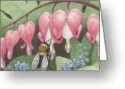 Insect Drawings Greeting Cards - Bee And Bleeding Heart Greeting Card by Amy S Turner