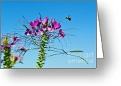 Pollinate Greeting Cards - Bee and Flower Greeting Card by John Greim