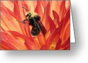 Chris Anderson Photography Greeting Cards - Bee Flambe Greeting Card by Chris Anderson
