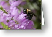 False Hug Greeting Cards - Bee Hug Greeting Card by Kathy Clark