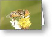 Close-up Greeting Cards - Bee Greeting Card by Khosro Zangene