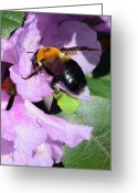 Seasonal Greeting Cards - Bee on Azalea Bloom Greeting Card by Lisa  Phillips
