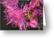 Pretty Flowers Greeting Cards - Bee on Lollypop Blossom Greeting Card by Kaye Menner