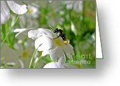 Primrose Greeting Cards - Bee on Primrose Greeting Card by Kaye Menner