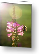 Kentucky Greeting Cards - Bee On Purple Flower Greeting Card by Alissa Sanderson