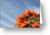 Pollinate Greeting Cards - Bee on Sunflower Greeting Card by Marjorie Imbeau