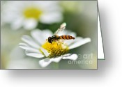 Flower Stamen Greeting Cards - Bee with Rainbow Wings Greeting Card by Kaye Menner