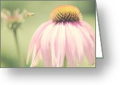 Cone Flower Greeting Cards - Beeautiful Greeting Card by Kim Fearheiley