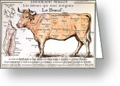 Livestock Drawings Greeting Cards - Beef Greeting Card by French School
