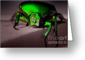 Beetles Greeting Cards - Beetle  Greeting Card by Venura Herath