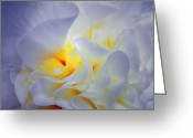 Floral Print Greeting Cards - Begonia Shadows Greeting Card by Lianne Schneider