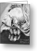 Canine Art Greeting Cards - Behind Closed Paws Greeting Card by Sheona Hamilton-Grant