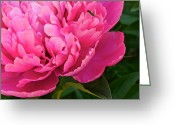 Luscious Greeting Cards - Behold the Beauty Greeting Card by Robert Harmon