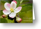 Susan M. Smith Greeting Cards - Being Fruitful Greeting Card by Susan Smith